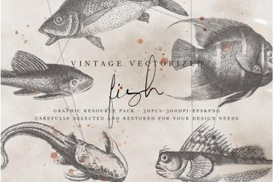 VintageVectorized - Fish Clipart