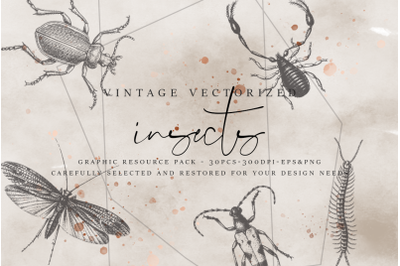 VintageVectorized - Insects Clipart
