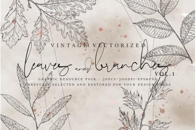 VintageVectorized - Leaves Clipart