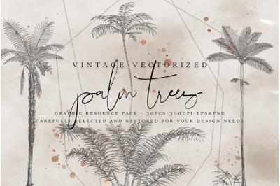 VintageVectorized - Palms Clipart