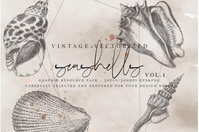 VintageVectorized - Seashells Clipart