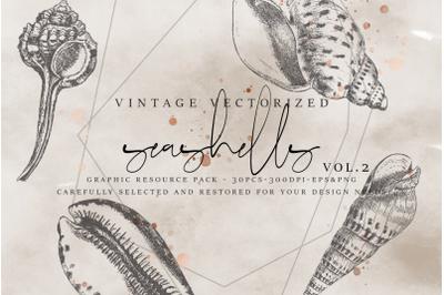 VintageVectorized - Seashells2 Clipart