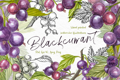 Blackcurrant in botanical style