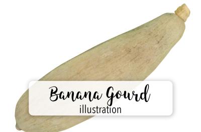 Pumpkins: Vintage Banana Gourd