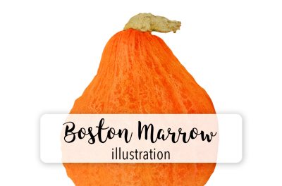 Halloween Pumpkins: Vintage Boston Marrow