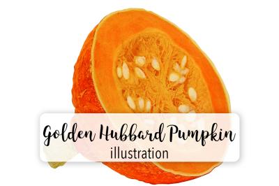 Halloween Pumpkins: Vintage Golden Hubbard