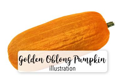 Halloween Pumpkins: Vintage Golden Oblong