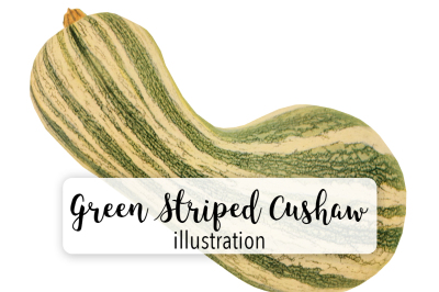Autumn Pumpkins: Vintage Green Striped Cushaw
