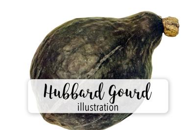 Autumn Pumpkins: Vintage Hubbard Gourd