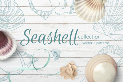Seashell collection of patterns