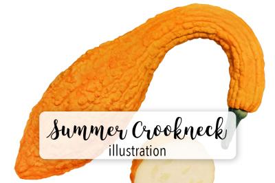 Pumpkins: Vintage Summer Crookneck Squash