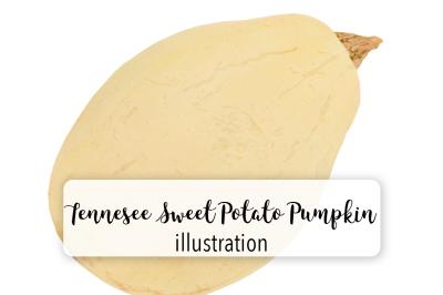 Pumpkins: Vintage Tennessee Sweet Potato Squash