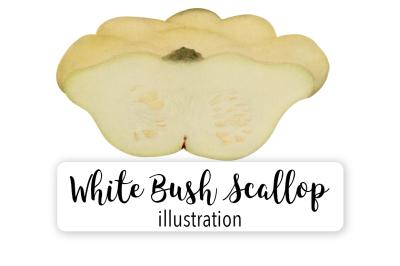 Halloween Pumpkins: Vintage White Bush Scallop