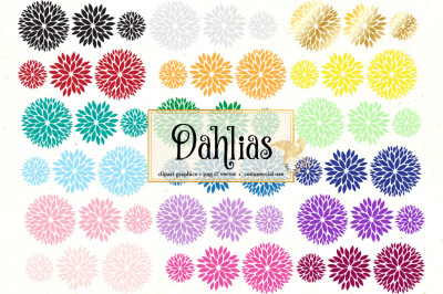 Dahlia Vector Clipart