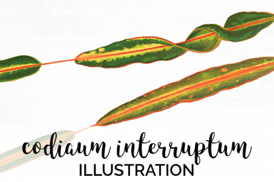 Leaves: Vintage Codiaum Interruptum