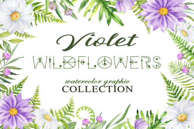 Violet wildflowers. Watercolor graphic collection.