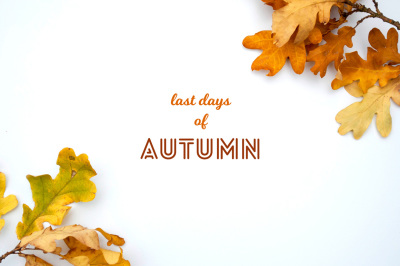 autumn backgrounds with an oak leaves