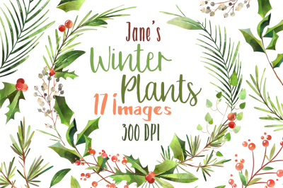 Watercolor Winter Plants Clipart