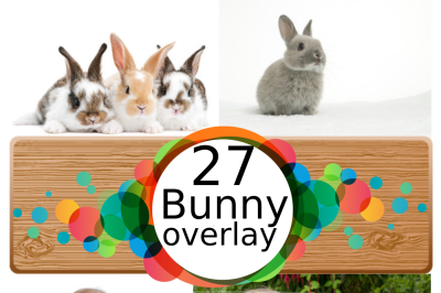 27 bunny Photo Overlays in PNG, Photography