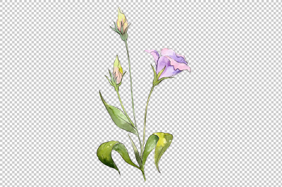 Blue and purple eustoma PNG watercolor set