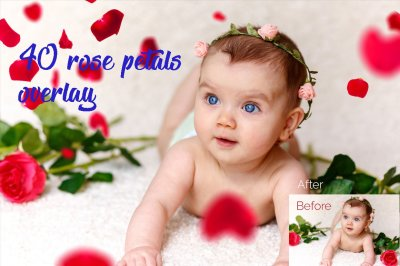 40 rose petals Photo Overlays in PNG, Photography