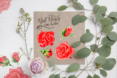 Wonderful red rose watercolor design pack