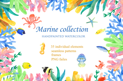 Marine animals and plants. Sea creatures. Watercolor clipart