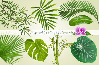 Tropical Foliage PNG Graphic Elements
