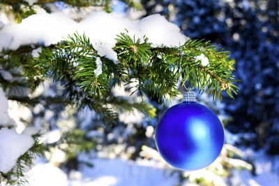 Blue Christmas ornament hanging on forest tree branch.