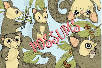 Possums | 5 cute images | Clip art illustrations | PNG/JPEG