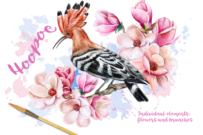 Hoopoe. Watercolor
