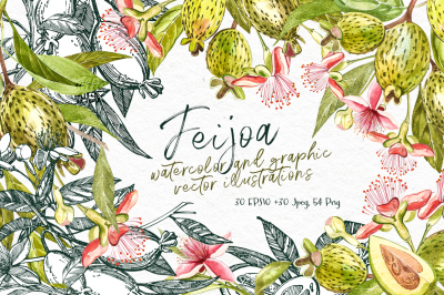 Feijoa Graphic & Watercolor clipart