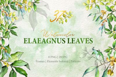 Watercolor Green Elaeagnus  PNG