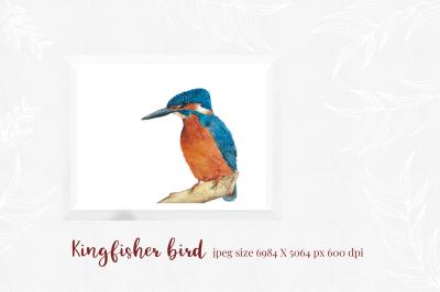Kingfisher - modern calligraphy font