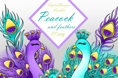 Peacock clipart