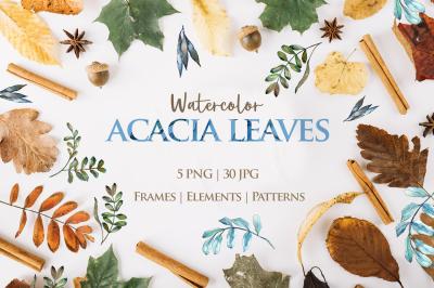 Acacia leaves Watercolor png