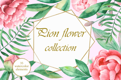 Peony Flower Collection. Watercolor.