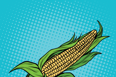 Ear of corn, harvest, agriculture
