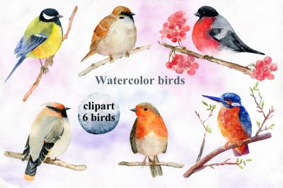 Watercolor birds. Clipart.