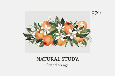 NATURAL STUDY: fleur d'orange set l watercolor floral set