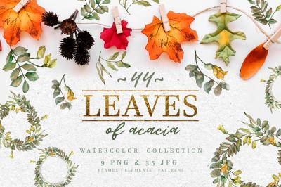 Leaves of acacia Watercolor png
