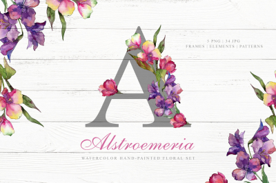 Alstroemeria Watercolor png