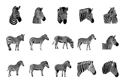 Zebra vector graphic illustration set on white background