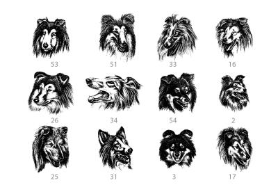 Vector hand drawn dog collie and doberman vintage illustrations set