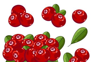 Cranberry Composition