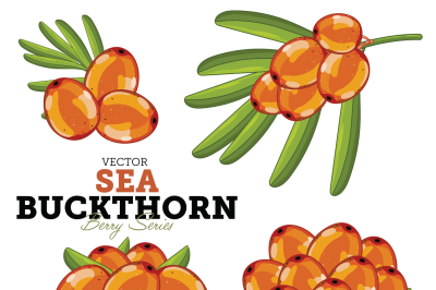 Sea Buckthorn with Leaves, Vector.