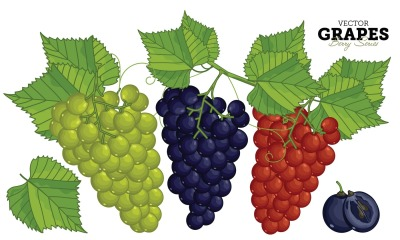 Grape with Leaves, Vector. Isolated on White Background.