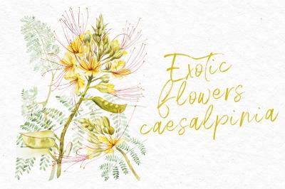 Exotic yellow flowers caesalpinia
