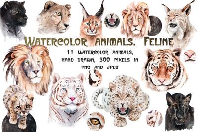 Watercolor realistic animals. Feline