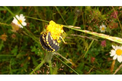 Caterpillar on wild flower